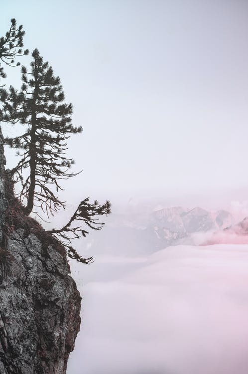 HD-обои, гора, дерево
