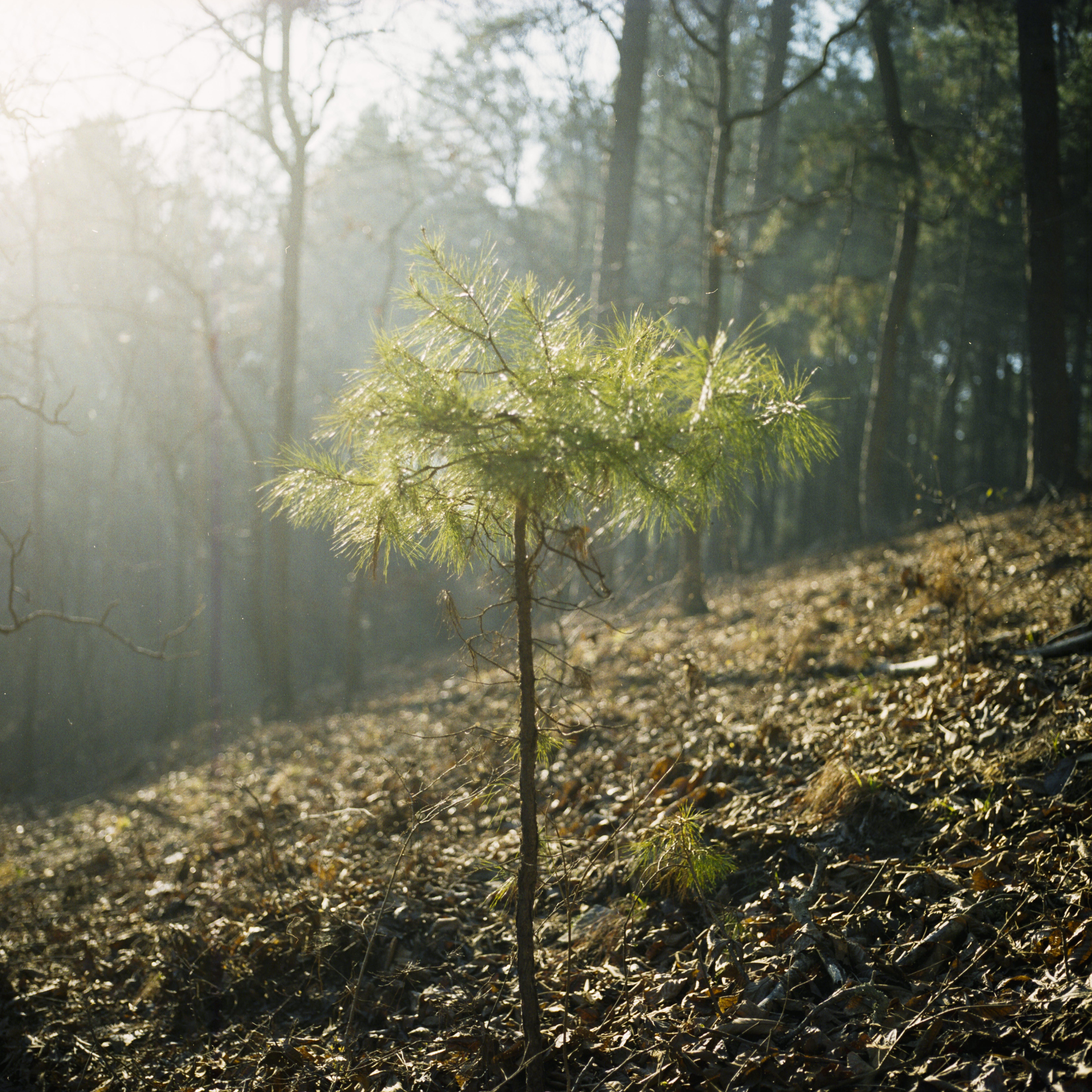 Gratis lagerfoto af baby træ, broken bow, film, filmfotografering