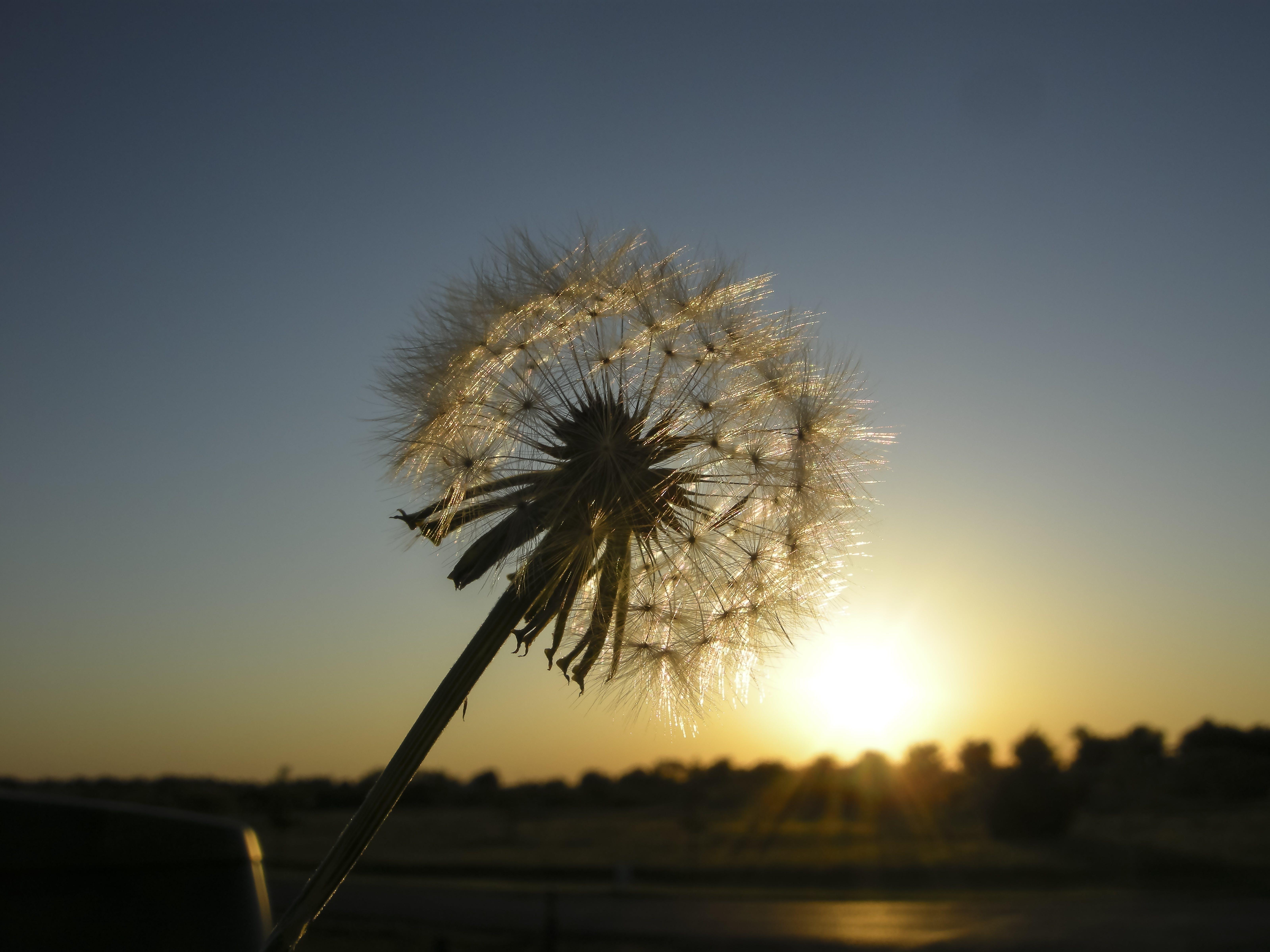 Gratis lagerfoto af baggrund, blomst, fjeder, himmel
