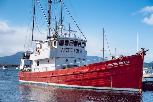 Δωρεάν στοκ φωτογραφιών με αρκτική αλεπού, θαλάσσιος, καράβι, κόκκινο