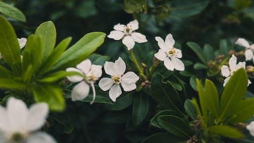 계절, 공원, 꽃, 꽃무늬의 무료 스톡 사진
