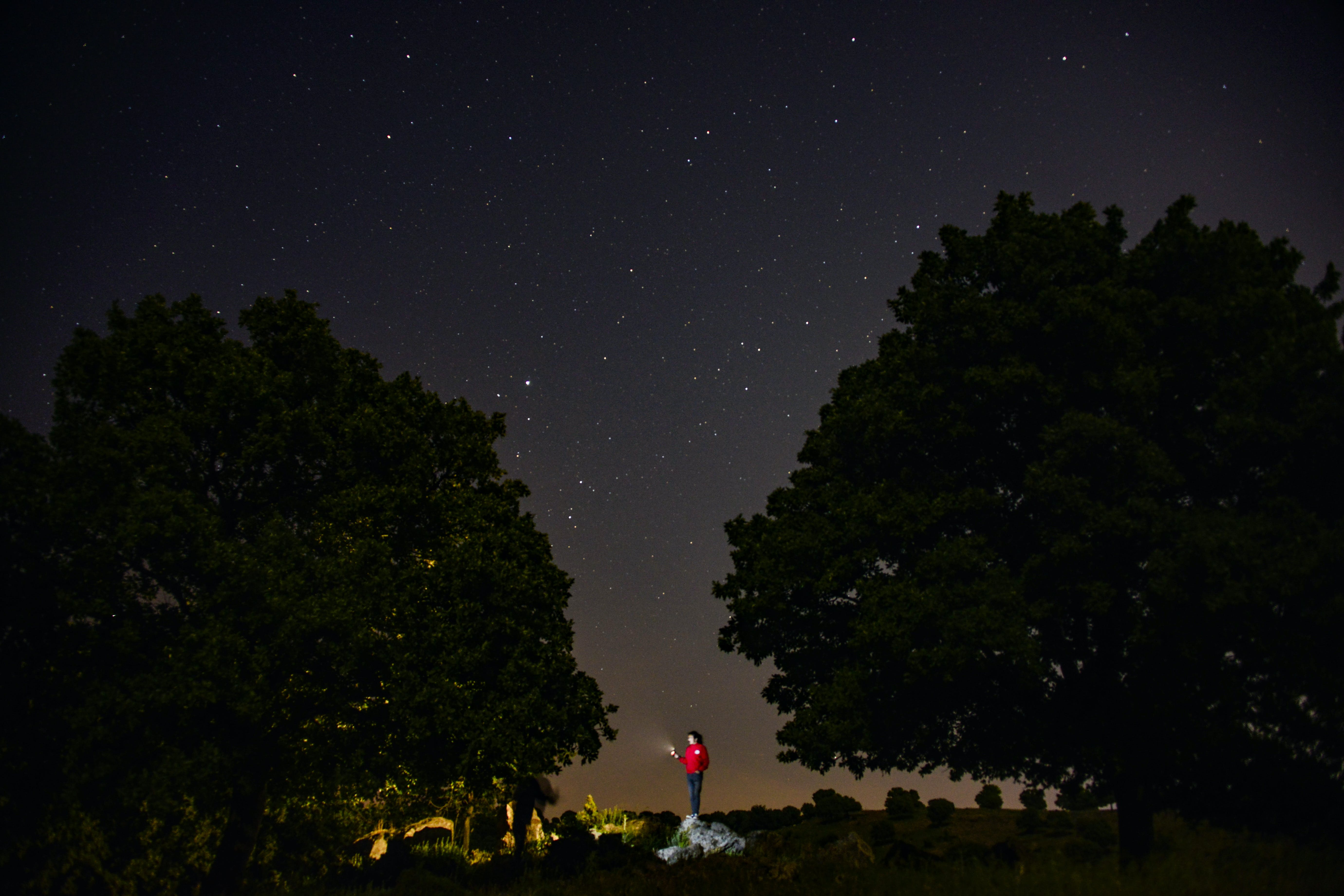 Person Standing Between Two Trees during Night Time