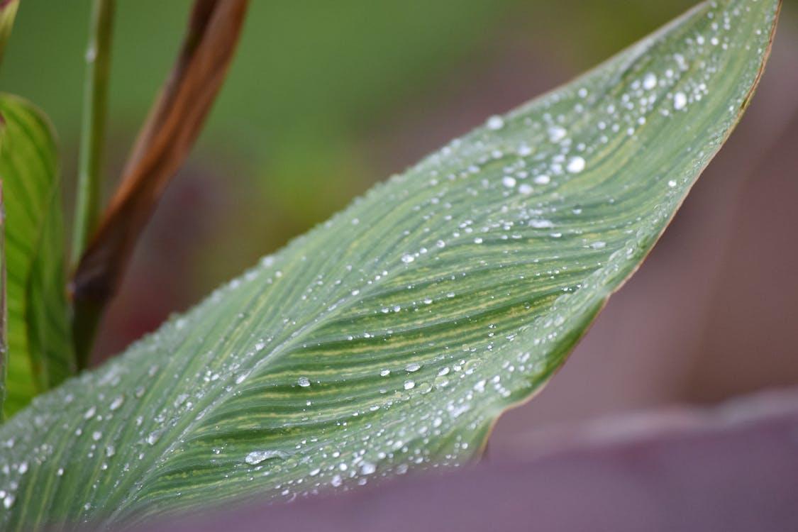 gotes de pluja en un full