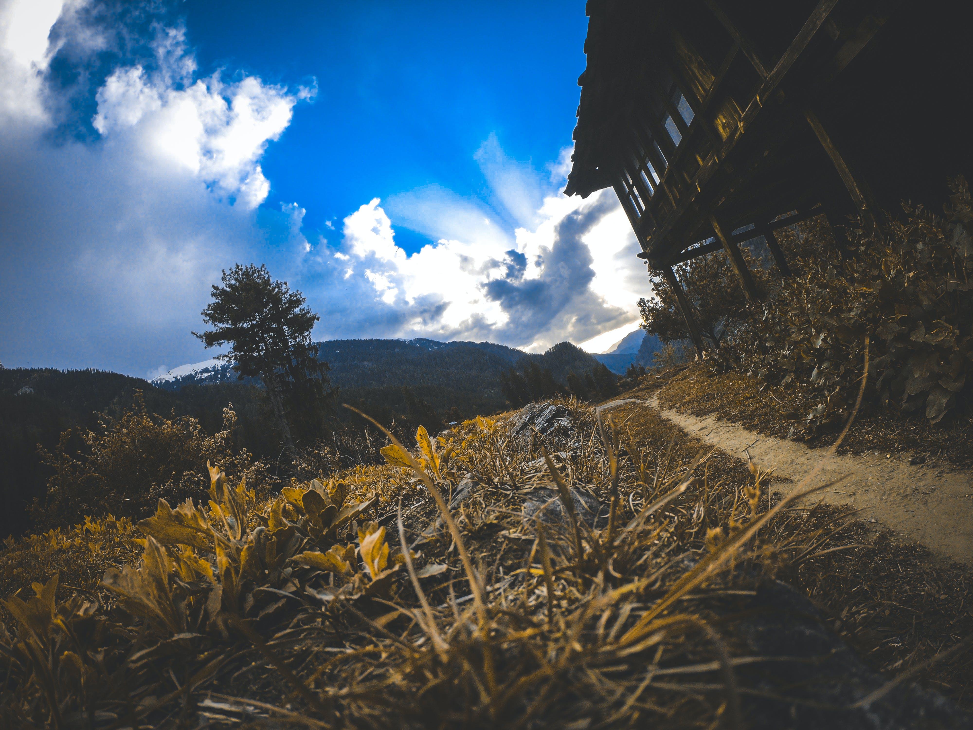 Ảnh lưu trữ miễn phí về #thiên nhiên, bầu trời, cảnh quan đẹp, cây