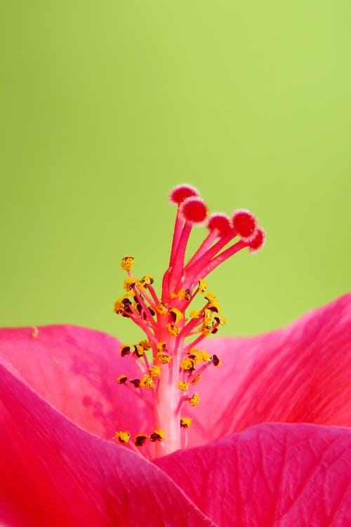 Photo of Pink hibiscus flower