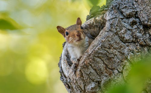 Squirrel in Wooden Tree