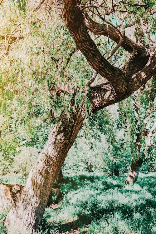 公園, 分公司, 分支機構, 原本 的 免費圖庫相片