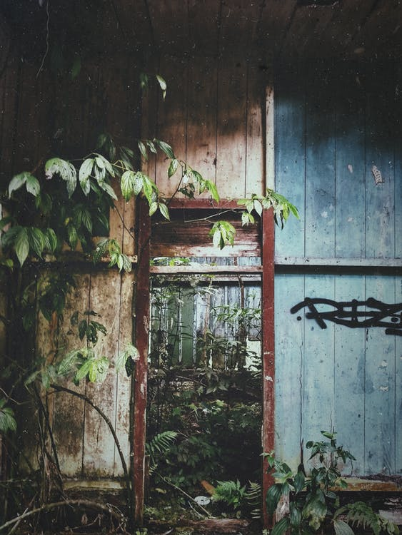 abandonat, arquitectura, de fusta