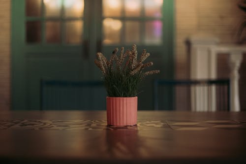 정물, 테이블, 화분 식물의 무료 스톡 사진