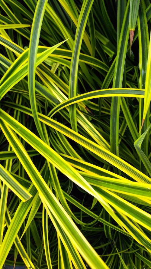 水生植物 的 免費圖庫相片