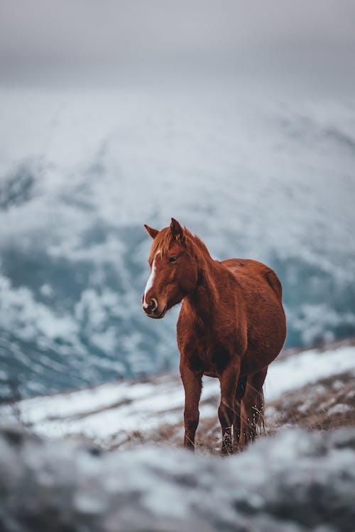 alan, alan derinliği, at