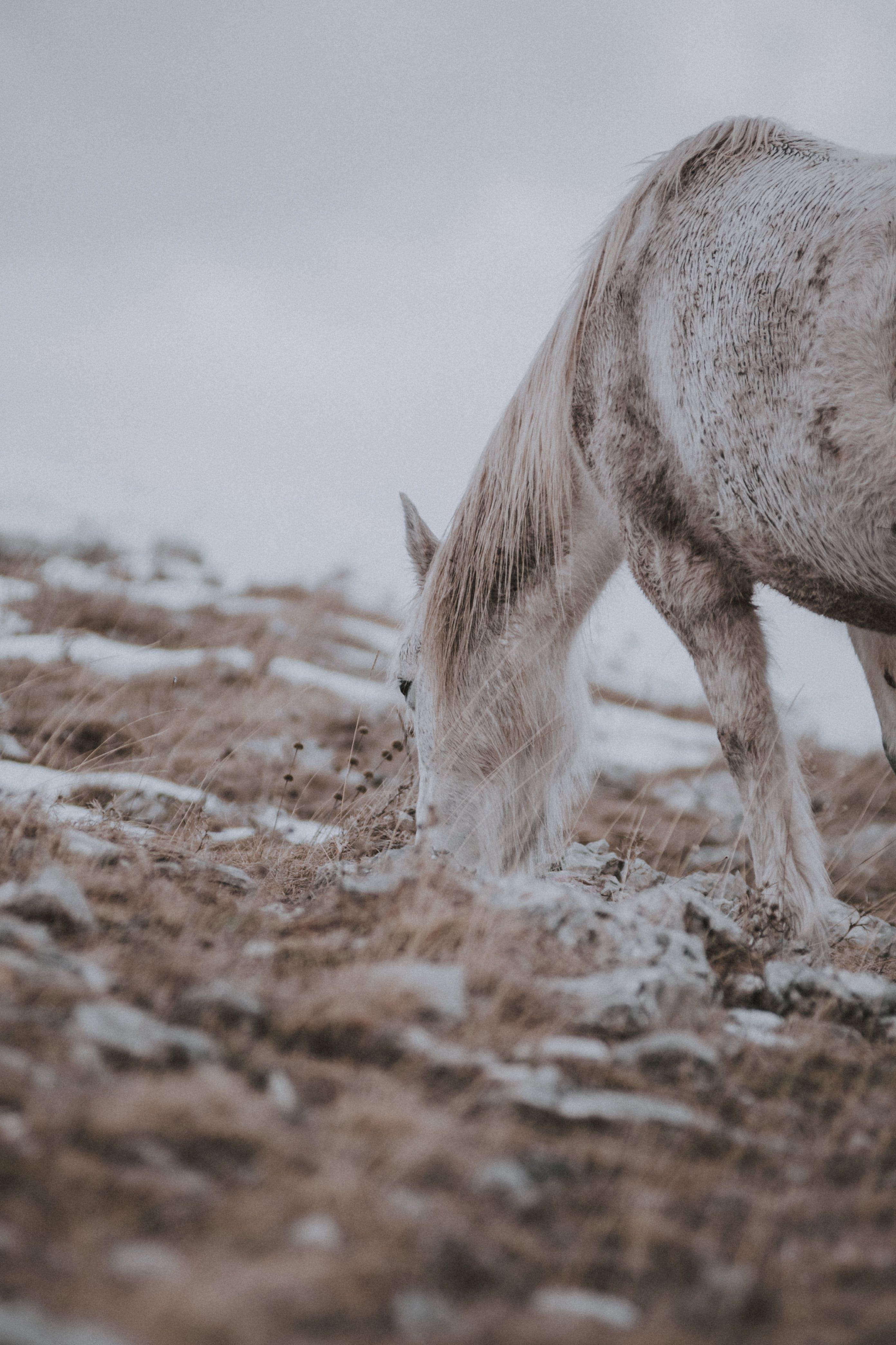 White Horse on Brown Soil
