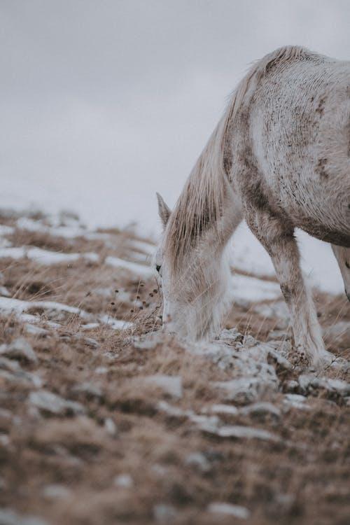 Foto d'estoc gratuïta de a l'aire lliure, animal, blanc, camp