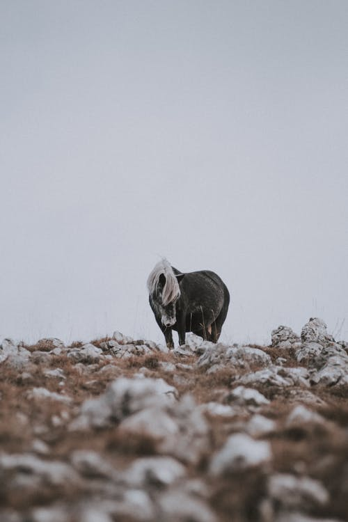 가축, 갈기, 검은색, 겨울의 무료 스톡 사진