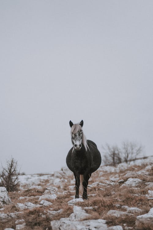 Grayscale Photography of Black Horse