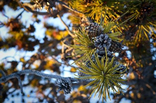 Free stock photo of dusky, trees, winter