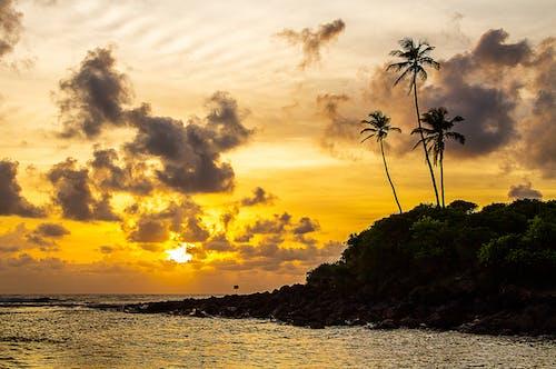 Foto stok gratis berjemur, cahaya matahari, datsun, kacamata antimatahari