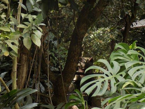 Free stock photo of dinosaur, florest, garden