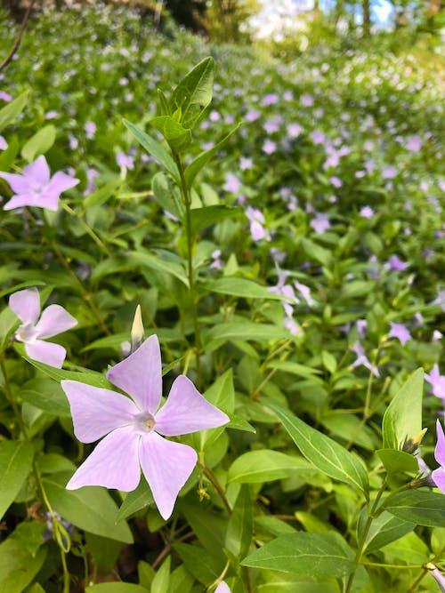 Ilmainen kuvapankkikuva tunnisteilla kaunis kukka, kukkakimppu