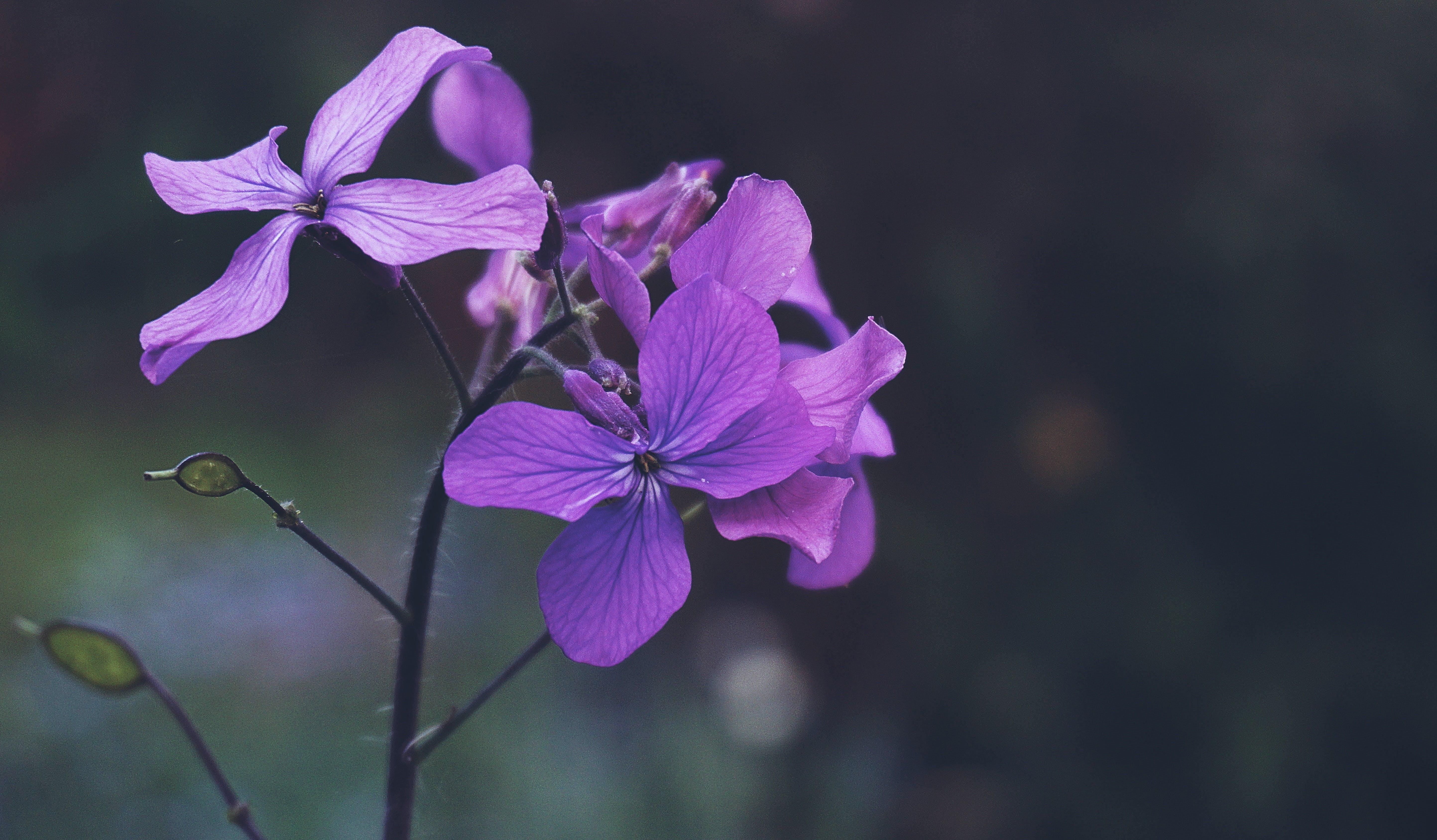 꽃, 꽃무늬, 꽃봉오리, 꽃이 피는의 무료 스톡 사진