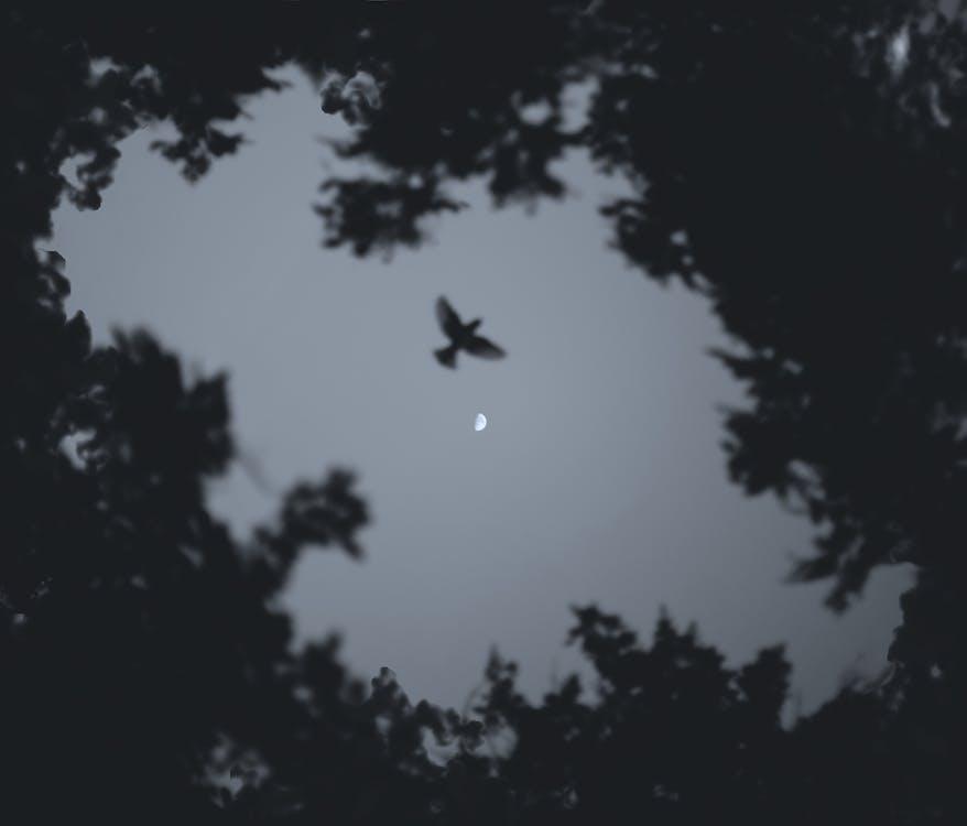 Lage Hoekfoto Van Vogels Die Tijdens De Nacht Vliegen