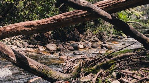 강, 개울, 나무, 낮의 무료 스톡 사진