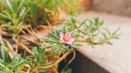 Foto stok gratis berwarna merah muda, bunga, cabang