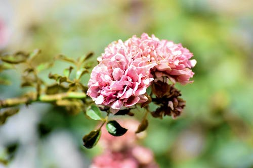 Photos gratuites de jardin de grand-mère