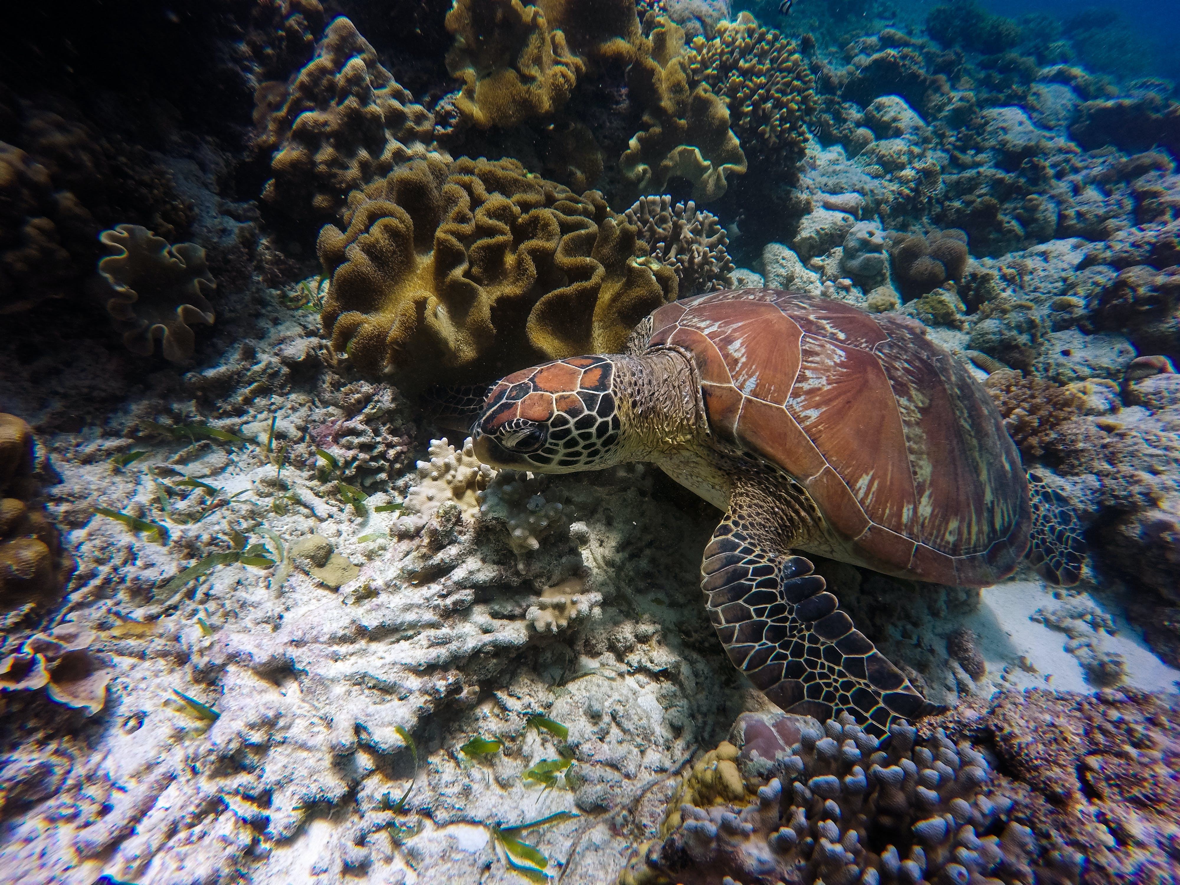 Brown and Grey Turtle in Underwater Photography