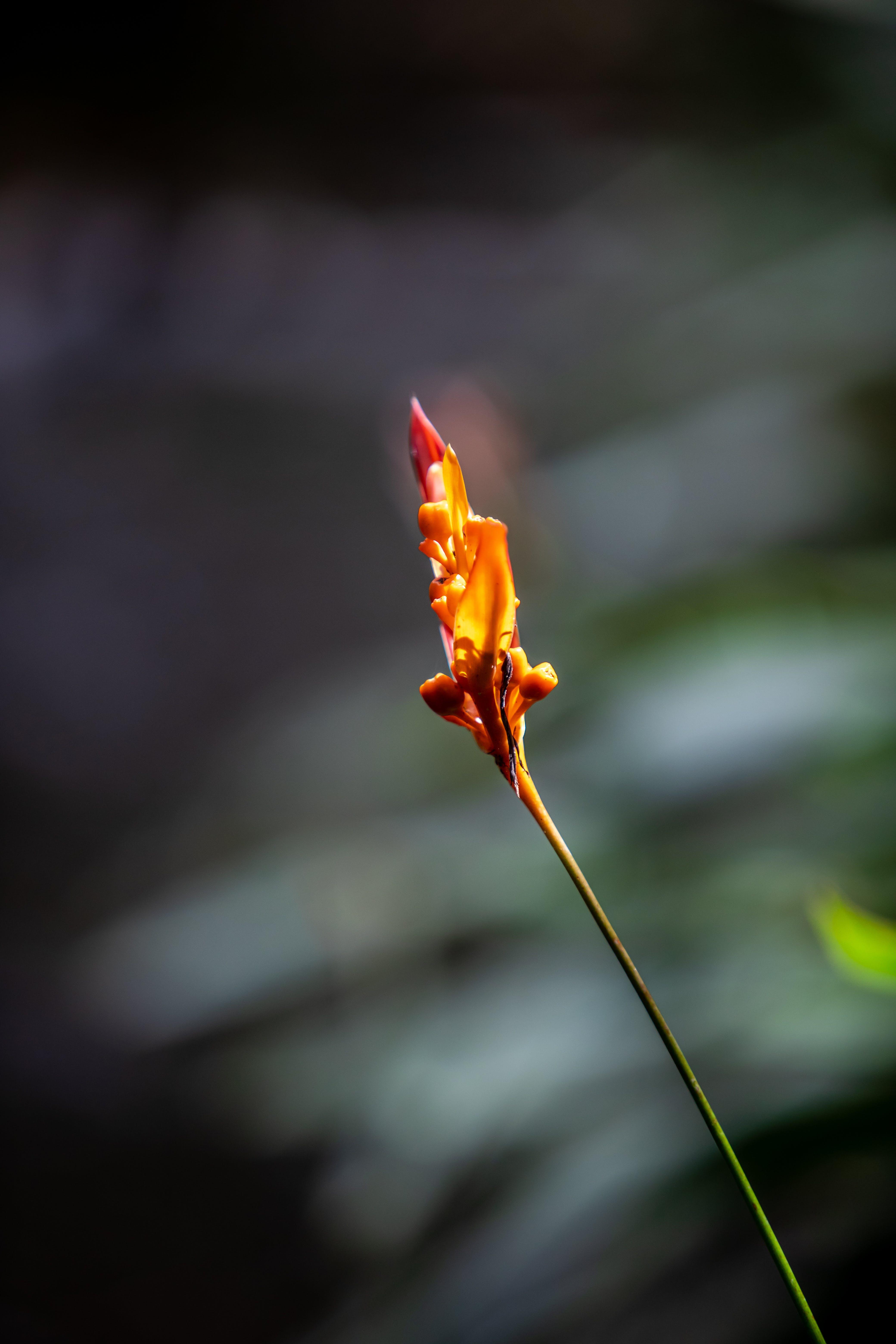 Gratis lagerfoto af blå blomst, blomkål, blomst, blomster