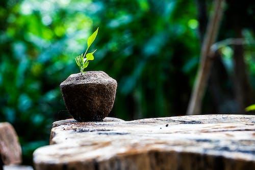 Foto stok gratis #alam, alam, bidang bunga, bunga