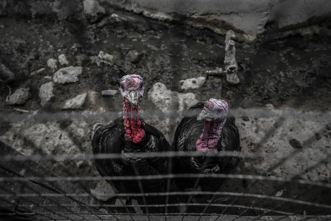 animale, donald tong, pelliccia