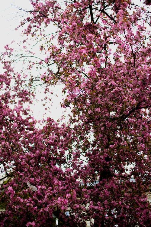 フラワーズ, ライラック, 春, 美の無料の写真素材