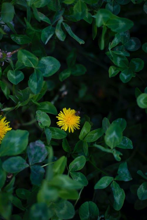 весна, красота, оса