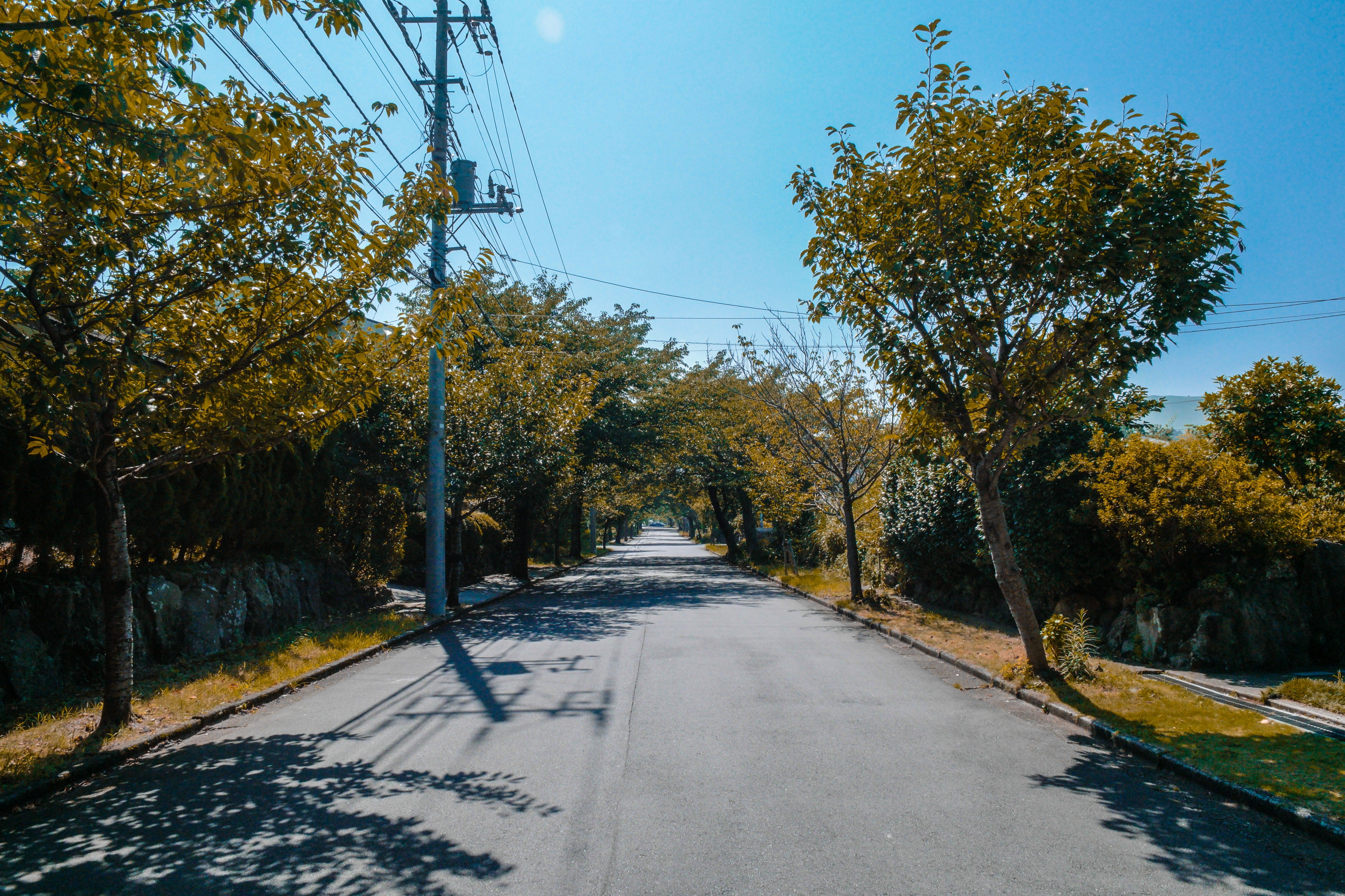 Free stock photo of road, street, trees, empty