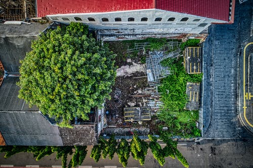 Aerial Photo of Green Tree Beside Building