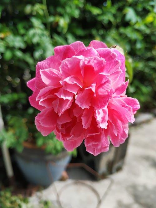 Бесплатное стоковое фото с сад цветов