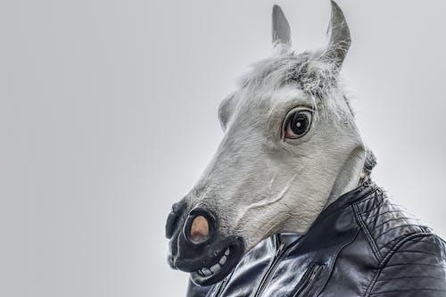 Fotos de stock gratuitas de animal, caballo, cabello, cabellos