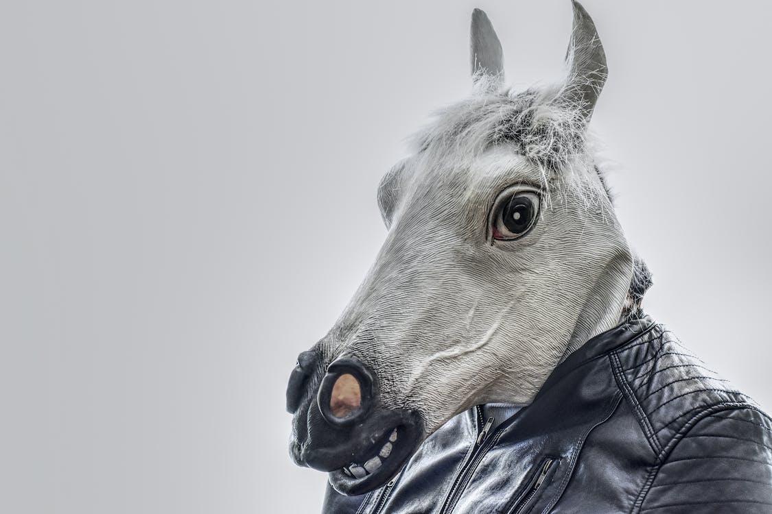White Horse Wearing Black Leather Zip-up Jacket