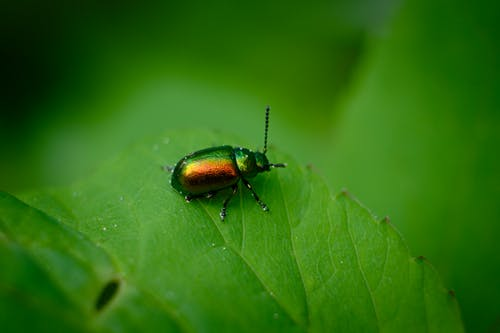 Free stock photo of beetle, colorado, macro, macro photo