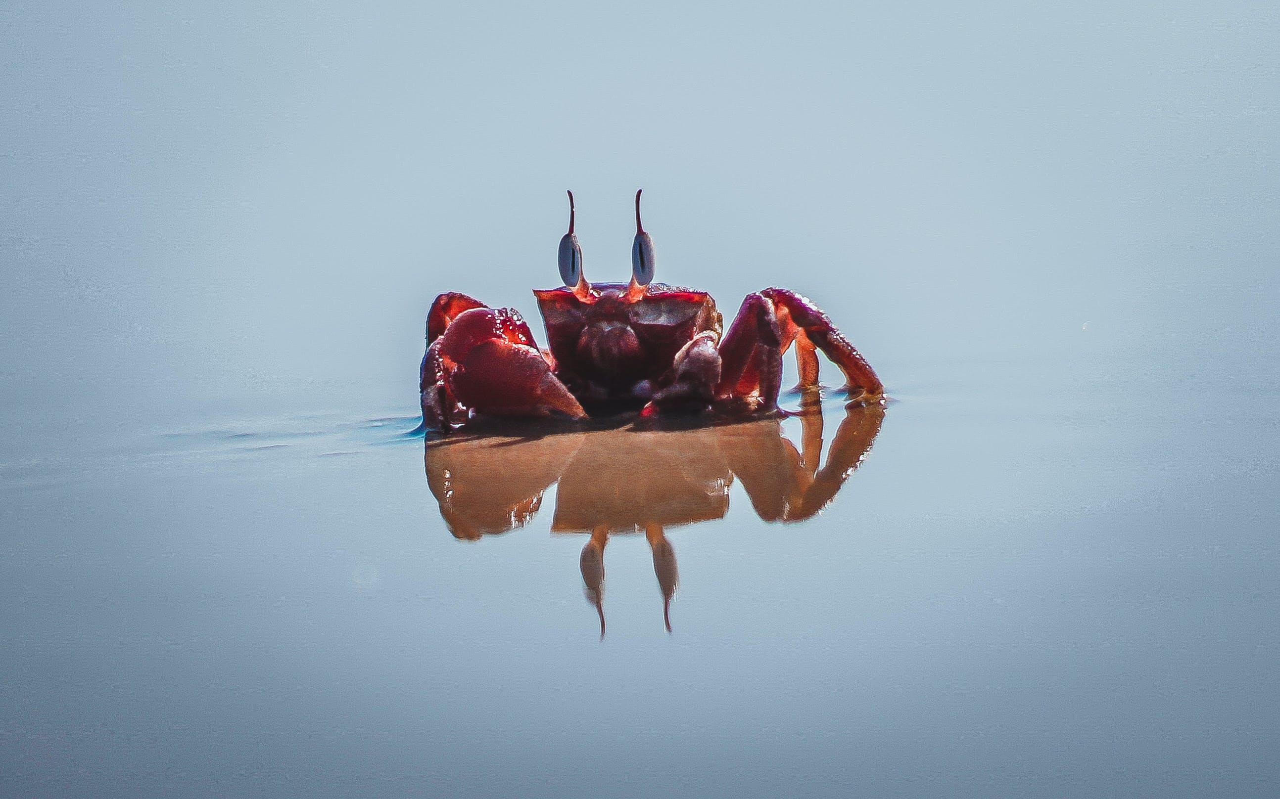 Photo of Red Crab on Seashore