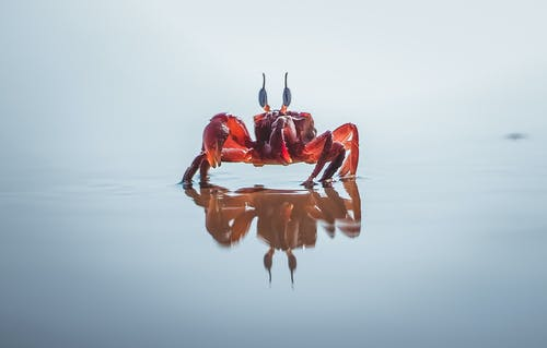 Red Crab On Body Of Water