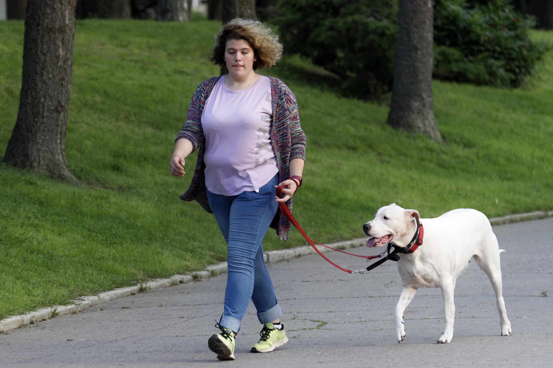 Foto d'estoc gratuïta de animal, arbres, caní, dona jove caminant amb gos blanc