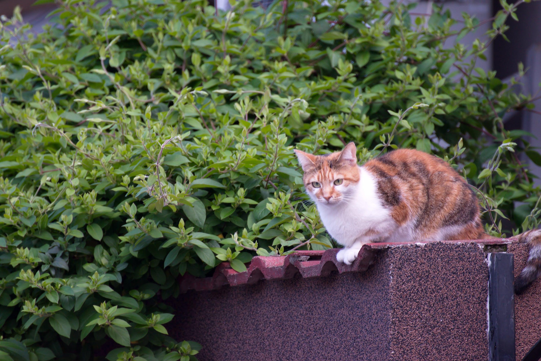 คลังภาพถ่ายฟรี ของ คอนกรีต, พืช, สีเขียว, แมว