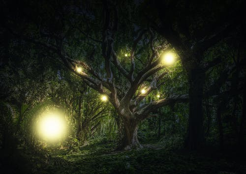 Free stock photo of ball lightning, bol, mystery lights, willow the wisp
