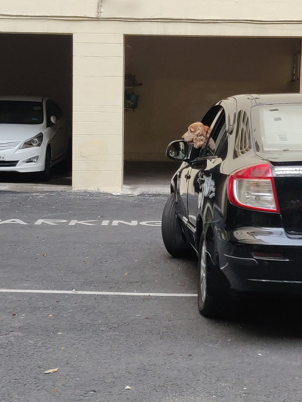 An Open Garage and 2 cars and a dog inside the black car