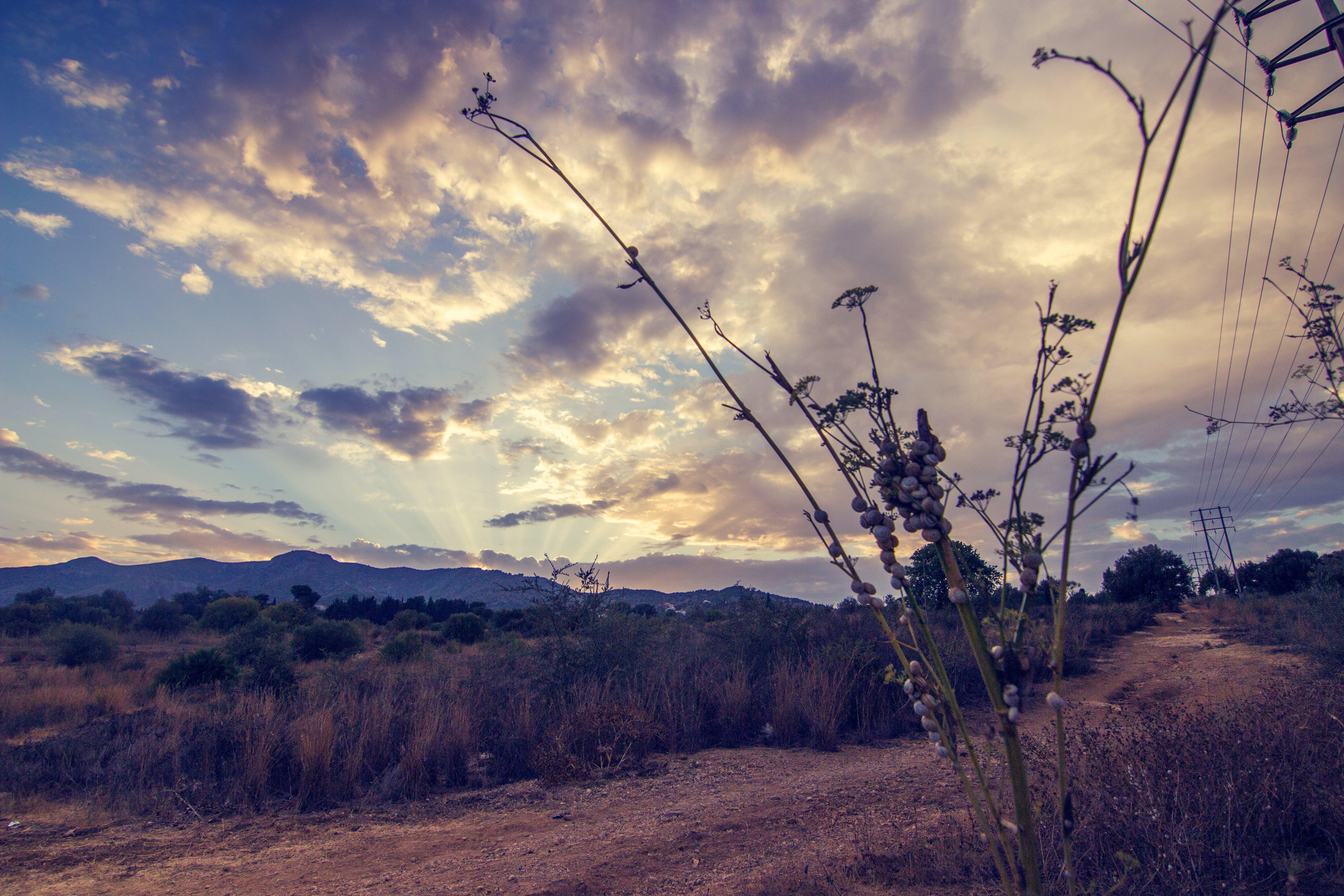 Fotos de stock gratuitas de cielo, naturaleza, nubes, plantas