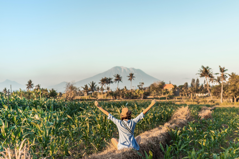 농경지, 농업, 농작물, 농장의 무료 스톡 사진