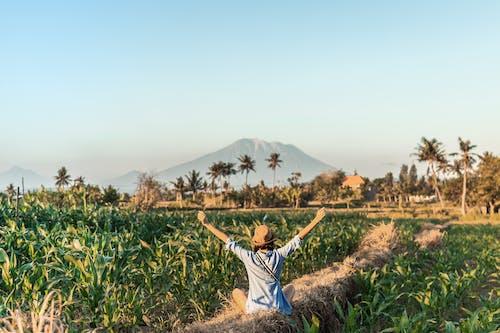 Gratis lagerfoto af afgrøde, agerjord, bane, bjerg