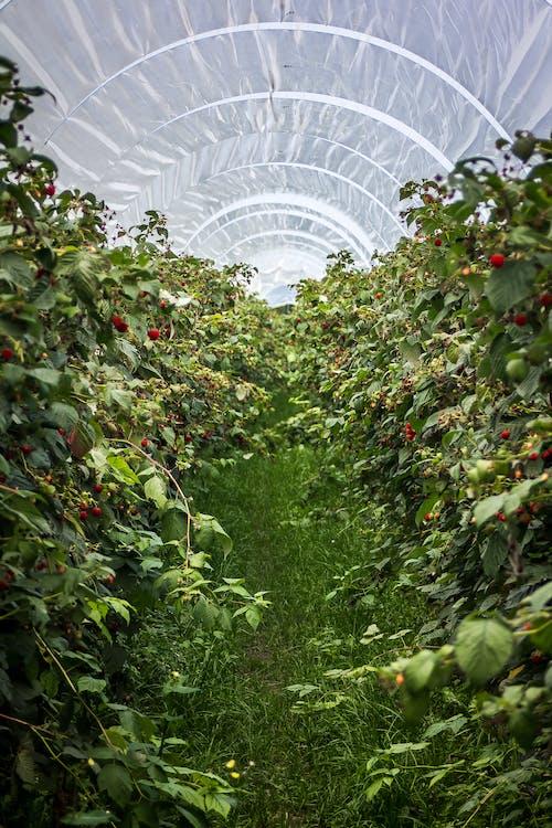 a l'aire lliure, agricultura, camps de cultiu